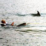 Dolphin wake